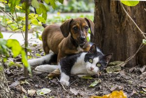 Cat and dog laying in the woods